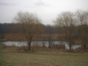 willow trees in front of swamp in meadow of Rosenberg's Farm January 6, 2002
